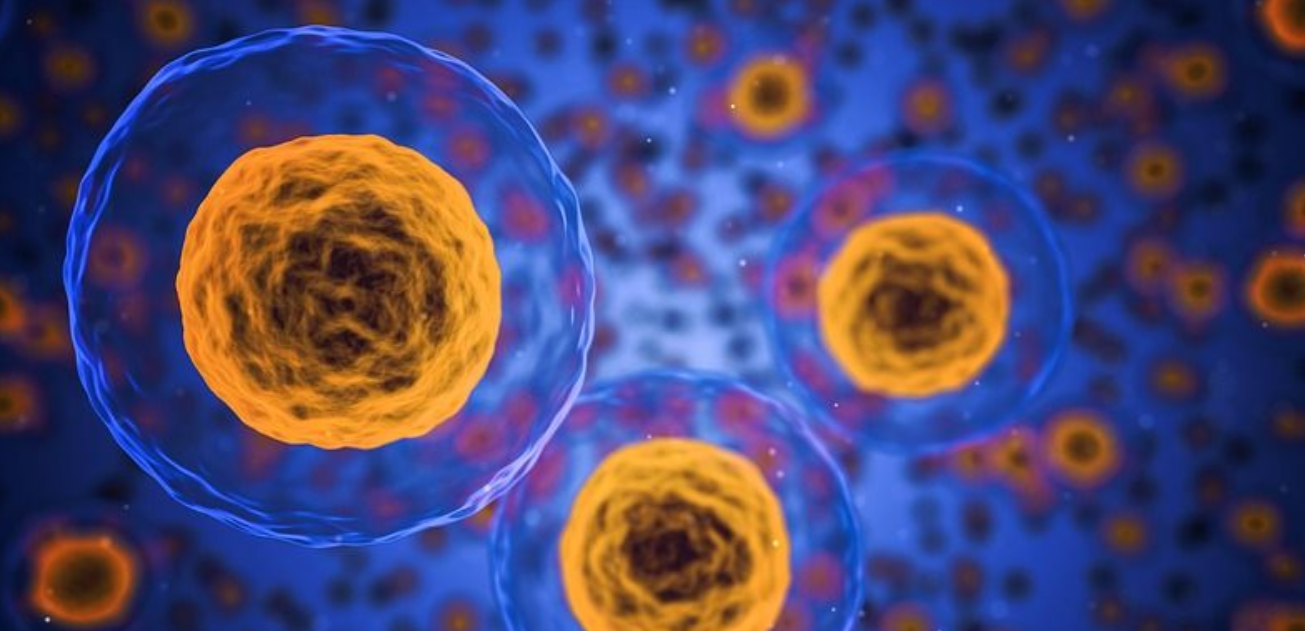 Bioengineers program cells to transform into 3D shapes